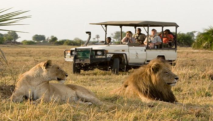 safari-delights-globetrouper