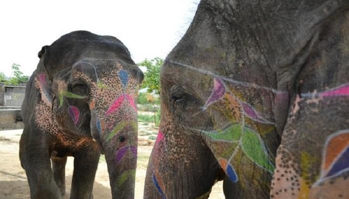 elefantastic-globetrouper
