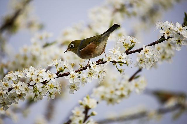 Bird Tourism India